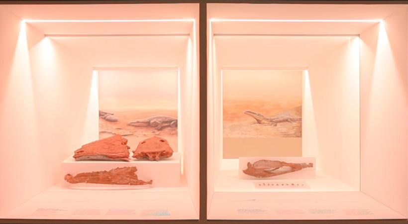 Réplicas Mandíbula Dinossauro | Impressão 3D